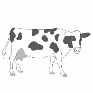 Mijn 258 Illustraties Leren Kinderen Engels Lizarenee